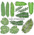 set with leaves tropical plants colorful vector image vector image