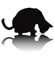 black cat silhouette with shadow vector image vector image