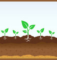 growing shoots out ground vector image vector image