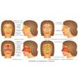 nasal sinus vector image vector image