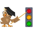 Owl Teacher shows pointer on lights Traffic light vector image