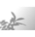 realistic shadow overlay vector image vector image