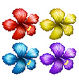 Set of gumamela flowers vector image vector image