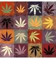 grunge hemp leaves vector image vector image