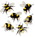 set bumblebees isolated on white background vector image vector image