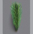 fir branch christmas tree pine sprig on vector image vector image