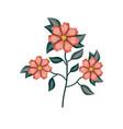 geranium flower plant in white background vector image