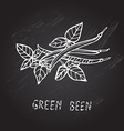 hand drawn green beans vector image