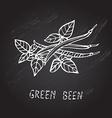 hand drawn green beans vector image vector image