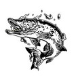 pike fish in water splashes concept vector image vector image
