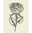 Rose Hand drawn artwork vector image vector image