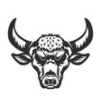 bull head on white background vector image vector image