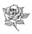 skull inside a rose flower vector image vector image