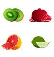 kiwi pomegranate grapefruit lime appetizing vector image vector image