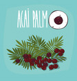 set of isolated plant acai palm fruits herb vector image vector image