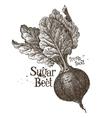 beet logo design template fresh vegetables vector image