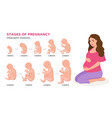 pregnant woman and embryonic development month by vector image vector image