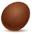 Realistic coconut vector image
