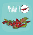 set of isolated plant amaranth flowers herb vector image vector image