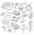 tea hand drawn isolated collection herbal vector image vector image