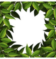 a nature leaf border vector image vector image