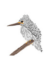 a small bird with a long beak sits on a branch vector image vector image
