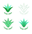 Aloe vera icons vector image