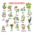 herbs to fight arthritis boswellia willow celery vector image