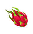 flat icon of whole pitaya exotic and sweet vector image vector image