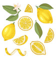 hand drawn lemons collection vector image vector image