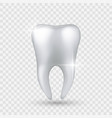 shiny tooth realistic healthy clear white tooth vector image