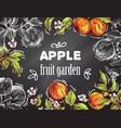sketch apple vector image