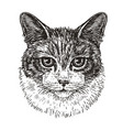 drawn portrait of cute cat animal kitty pet vector image