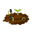 growing plant in soil vector image