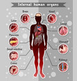 human internal organs template vector image