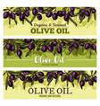 olive oil banner with border of black fruit leaf vector image vector image