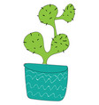 simple cactus in blue vase illsutation on white vector image vector image