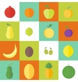 Flat elements for web design fruits vector image