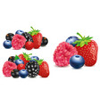 group of strawberry blueberry raspberry vector image vector image