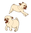 Set of two pug puppies vector image