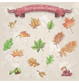 autumn leaves viburnum berries chestnuts and vector image vector image
