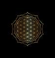 flower life yantra mandala sacred geometry vector image vector image