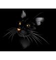 Black cat in the dark2 vector image vector image