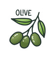organic ingredient - olive italian pizza vegan vector image