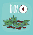 set of isolated plant jojoba seeds herb vector image vector image