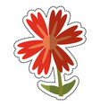 cartoon lily flower natural vector image
