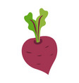 icon ripe beetroot with big green leaves vector image