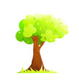 lonely big green tree oak with lush canopy and vector image