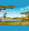 zebra in the forest vector image