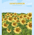 sunflowers field summer background vector image vector image